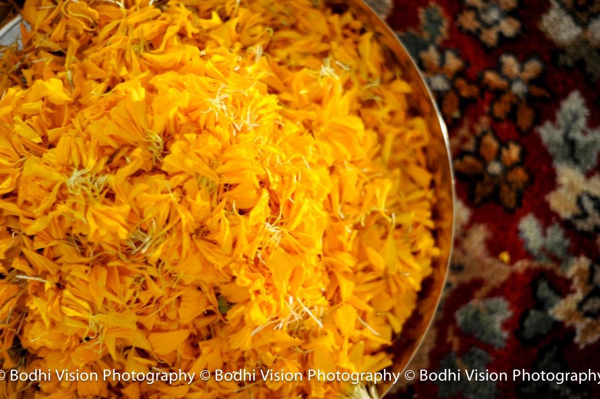 Bodhi Vision Komal_0666